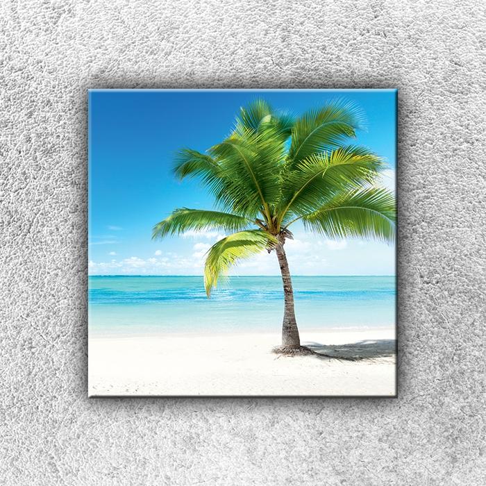 Jednodílný obraz Osamocená palma 30 x 30 cm
