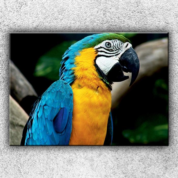 Jednodílný obraz Modrý papoušek Ara 70 x 50 cm