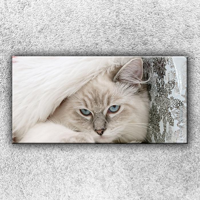 Jednodílný obraz Modrooká kočka 100 x 50 cm