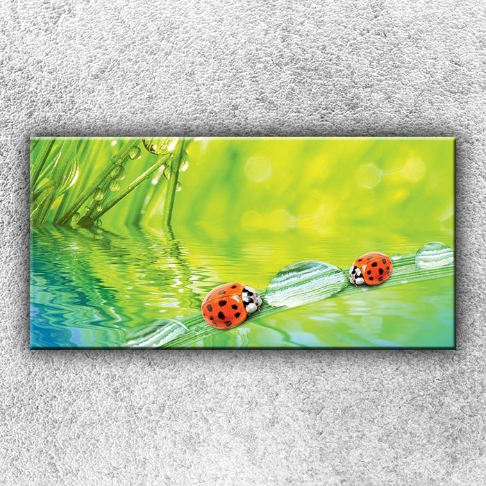 Jednodílný obraz Berušky 100 x 50 cm