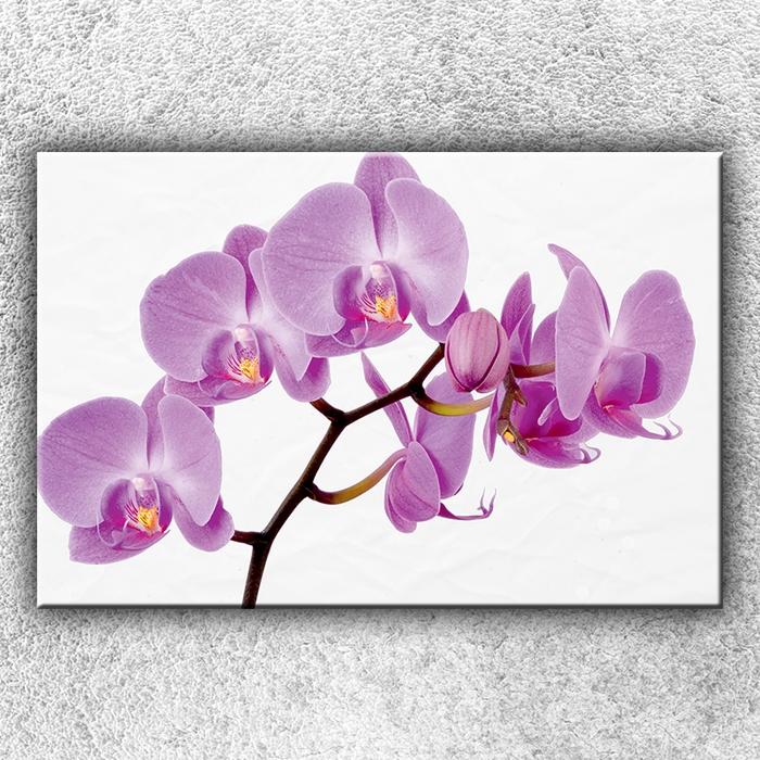 Jednodílný obraz Fialová orchidej 120 x 80 cm