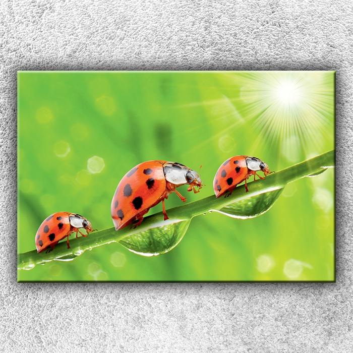 Jednodílný obraz Tři berušky 120 x 80 cm