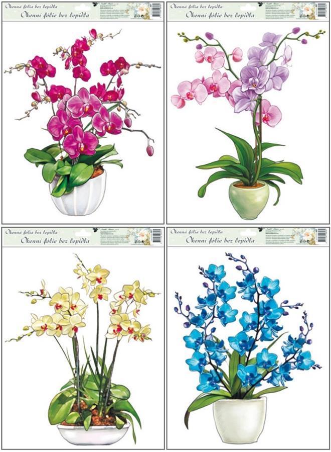 Okenní fólie Orchideje set