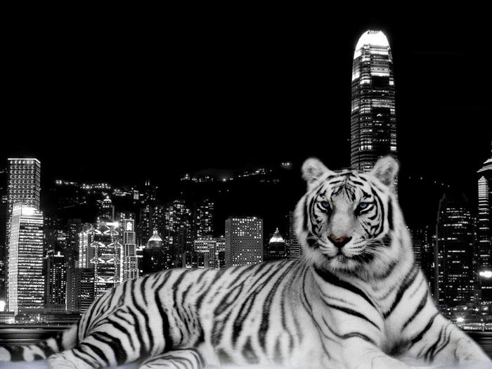 Plakát - Městský tygr